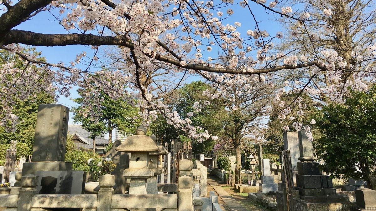 בית העלמין בשכונת ינאקה – טוקיו